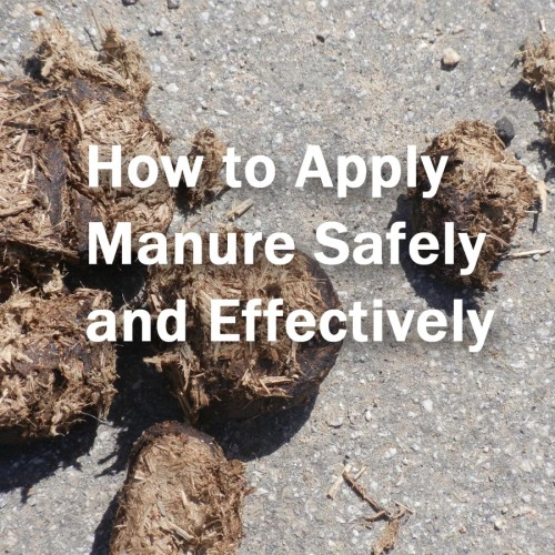 Use manure safely in the garden