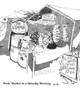 If Birds Had Farmers Markets CARTOON