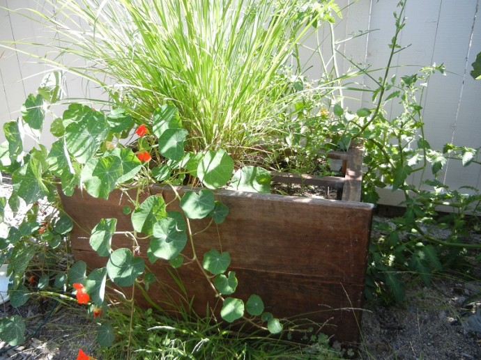 Using an Old Bureau as a Planter for Creative Raised Bed Gardening