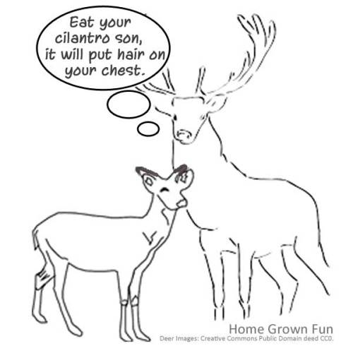 Herbs Deer Won't Eat