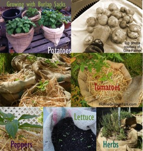 How-To Use Burlap Sacks in the Garden
