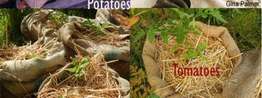 How to Grow Plants in Burlap Sacks