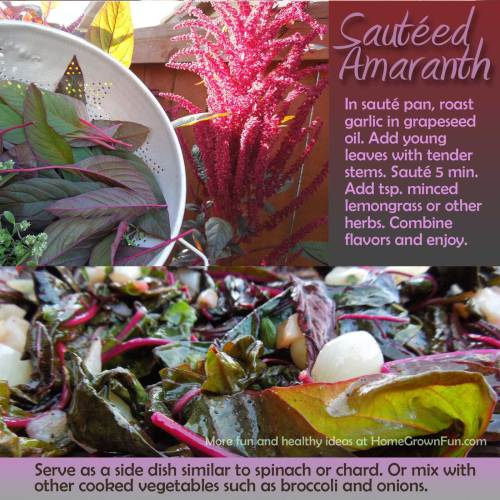 Amaranth Recipes