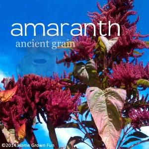 ALL ABOUT Amaranth - History, Cook It, Eat It, Grow It