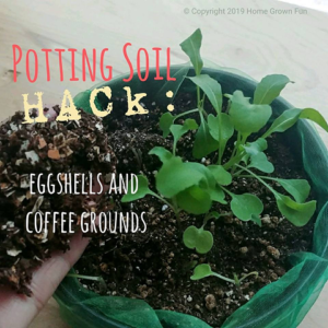 HOW TO MAKE Potting Soil with Eggshells and Coffee Grounds