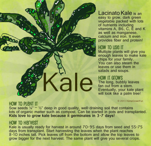 dinosaur kale how to plant