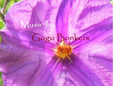 Recommended Music and Videos for Kids - Gogo Bonkers