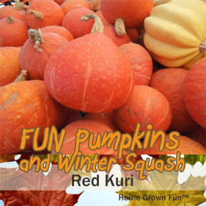 Red Kuri pumpkin seeds uses winter squash types