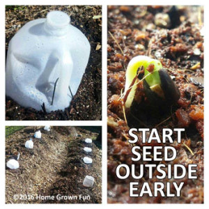 HOW TO Start Seeds EARLY OUTSIDE - Seed Starting Tips and Tricks