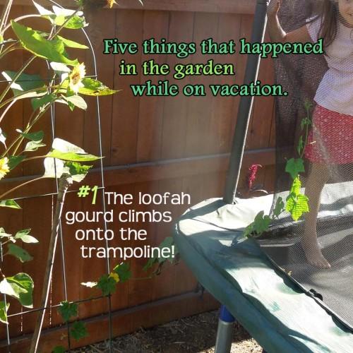 Vacation Garden Watering Ideas 1 loofah small