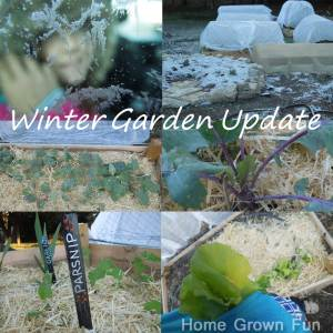 Winter Garden Update