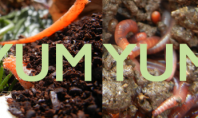 Best Foods to Feed Red Wiggler Composting Worms