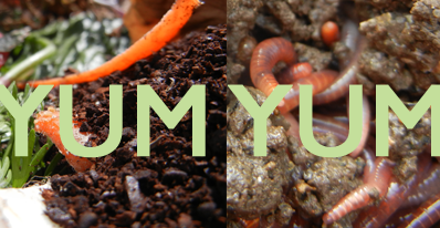 Best Foods to Feed Red Wiggler Composting Worms | Home Grown Fun