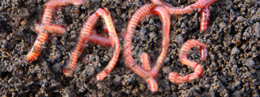 Worm Composting FAQs
