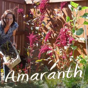 About Amaranth