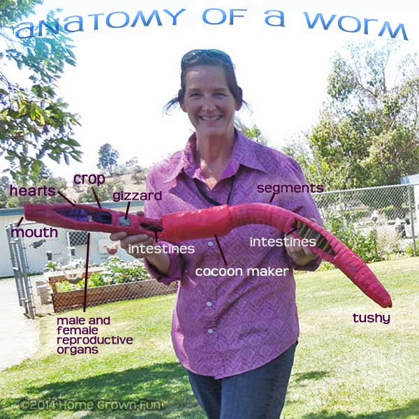 Model Of A Red Wiggler Worm Home Grown Fun