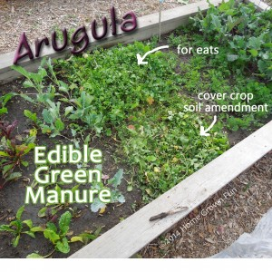Using Edible Cover Crops and Green Manures in the Home Garden