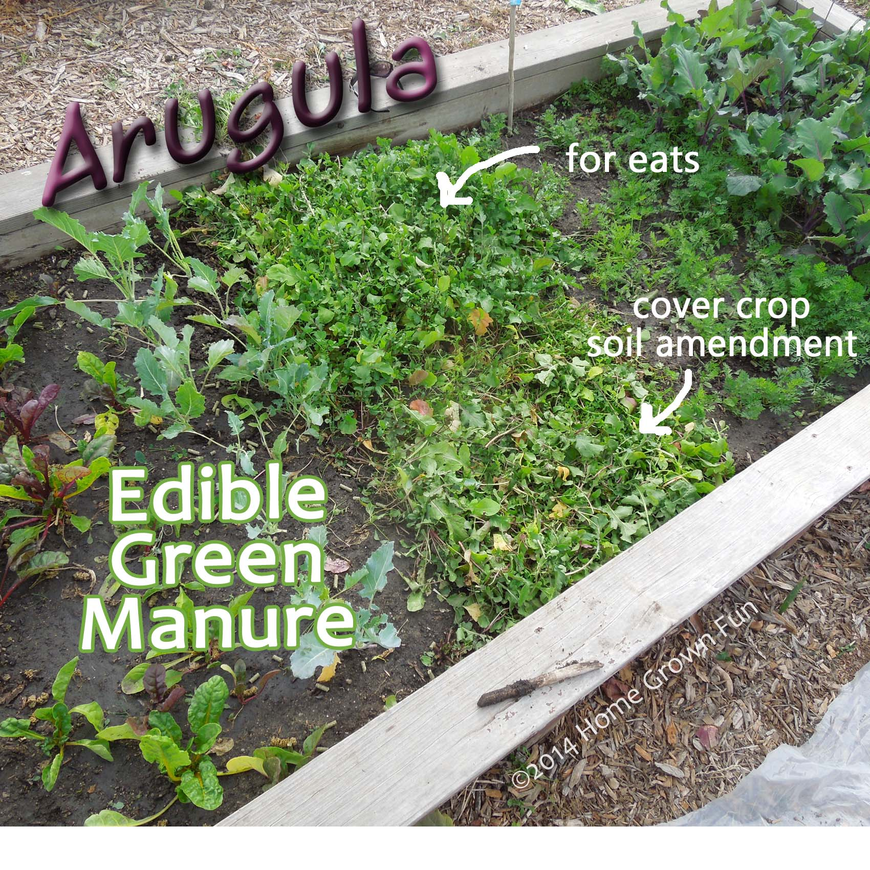 How to Use Arugula as a Cover Crop