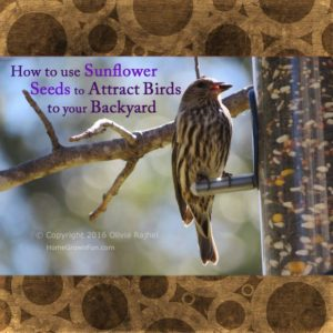 All About Sunflower Seeds to Attract Birds