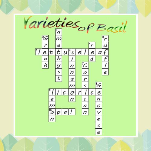 basil-crossword-answers