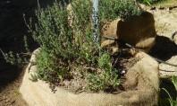 Coffee Sack Herb Garden