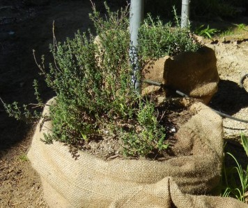 Coffee Sack Herb Garden