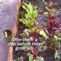 Coffee Grounds Fertilizer for Plants – Good Source of Nitrogen? Does it Acidify the Soil?