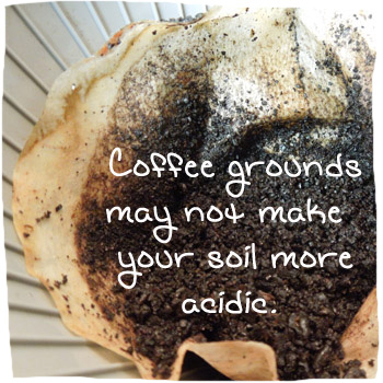 Coffee Grounds Fertilizer For Plants Good Source Of Nitrogen Does It Acidify The Soil Home