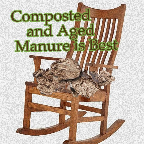 composted and aged manure is best