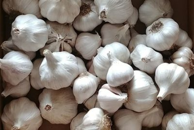 Quick and Easy Guide to Growing Garlic