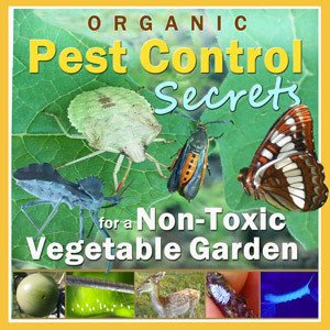 Organic Pest Control Secrets for a Non-Toxic Vegetable Garden