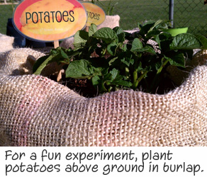 PLANT POTATOES IN BAGS