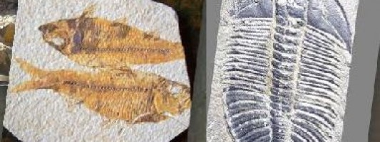 Dig your own Fossils in Wyoming and Utah