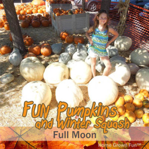 11 Fun Pumpkins and Winter Squash and How to Use Them