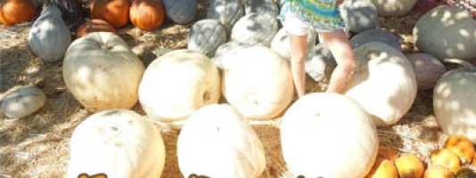 white pumpkins types and uses