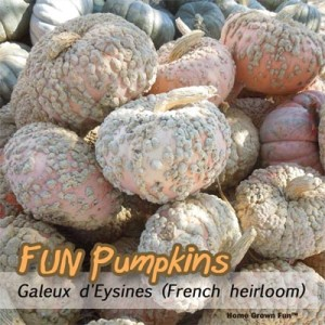 bumpy pumpkin types
