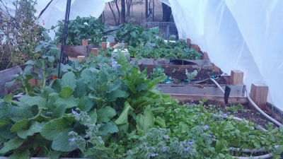 What can you grow in a greenhouse.