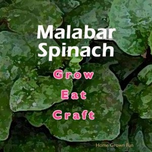 Malabar spinach recipes
