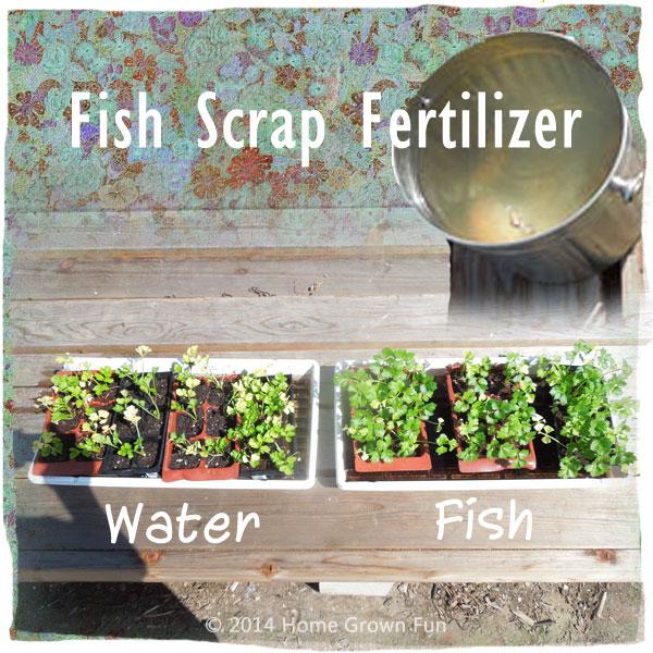 Homemade Fertilizer for Vegetables