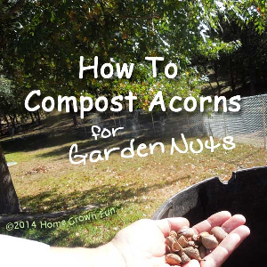How to Compost Acorns