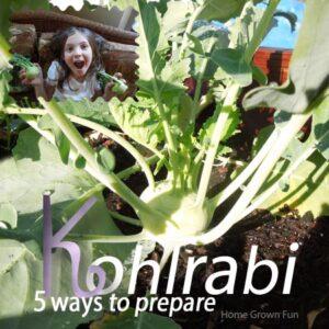 kohlrabi image how to eat kohlrabi plus recipe for kohlrabi