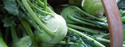 how to grow organic kohlrabi