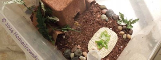 pet cricket, house for cricket