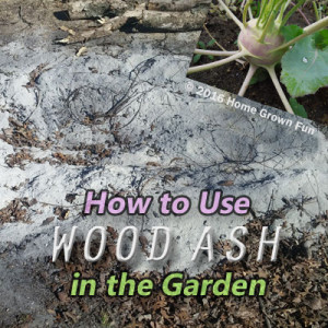 How to Use Wood Ashes in the Garden