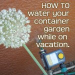 water container garden while away