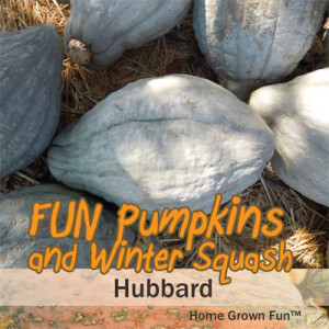 Best pumpkin pie pumpkins and squash