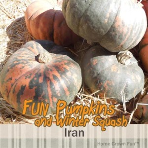 iran pumpkin seeds uses winter squash types