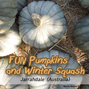 jarrahdale pumpkin seeds uses winter squash types