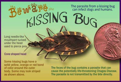 Kissing Bugs and Chagas Disease - 25 Facts That Will Save Your Sanity!