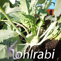 compost for kohlrabi